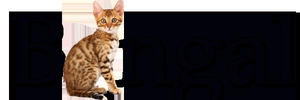 Bengal Friendly Kittens